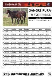 SANGRE PURA DE CARRERRA