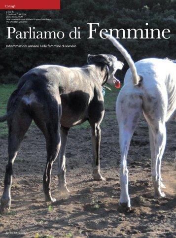 Femmine Levriere - Adozioni Levrieri