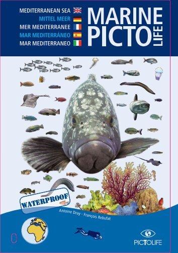 Book Medi 2012.pdf
