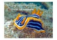 5_mollusques_grpD2_12