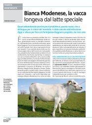 Bianca Modenese, la vacca longeva dal latte ... - Ermes Agricoltura
