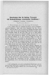 Bemerkungen über die Gattung Tricondyla und Neubeschreibungen ...