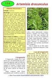 Artemisia dracunculus - Piante spontanee in cucina