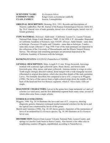 Ecclisomyia bilera - California Department of Fish and Game