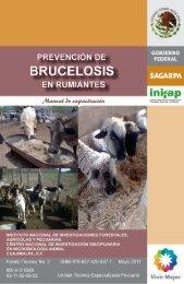 MANUAL BRUCELOSIS.pdf - UTEP - Instituto Nacional de ...