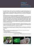 Regeneration bei freilebenden Plattwürmern - Sparkling Science - Seite 3