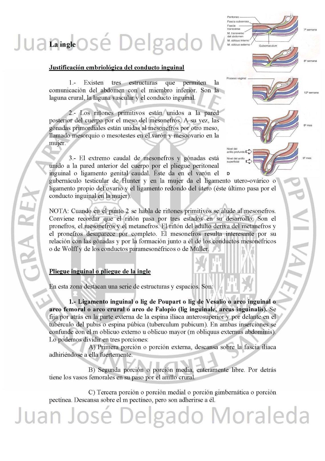 Lujo Anatomía Y Fisiología De La Conferencia Toma Nota De Martini ...