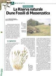 La Riserva naturale Dune Fossili di Massenzatica - Ermes Agricoltura