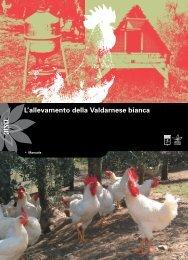 Allevamento della Valdarnese Bianca - Pollo del Valdarno