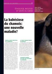 La babésiose du chamois: une nouvelle maladie? - Chasse & Nature