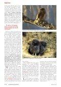 ALI NELLA NOTTE - Page 3