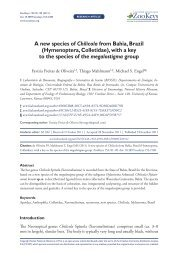 A new species of Chilicola from Bahia, Brazil - Pensoft Publishers