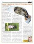 Jornal Sapiencia Internet ESPECIAL ARTIGOS_Layout 1.qxd - Page 5