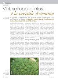 Vini, sciroppi e infusi: è la versatile Artemisia - Ermes Agricoltura