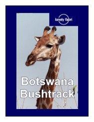 Botswana bushtrack - arteteca