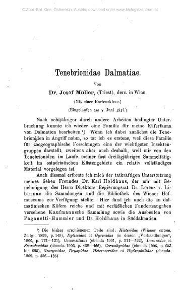 Tenebrionidae Dalmatiae.
