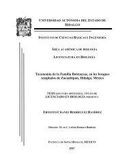 Taxonomia de la familia boletaceae.pdf - Universidad Autónoma del ...