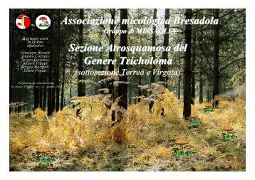 Tricholoma - GSM Funghi