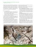 Ambiente Montano - CILENTO IN RETE - Page 7