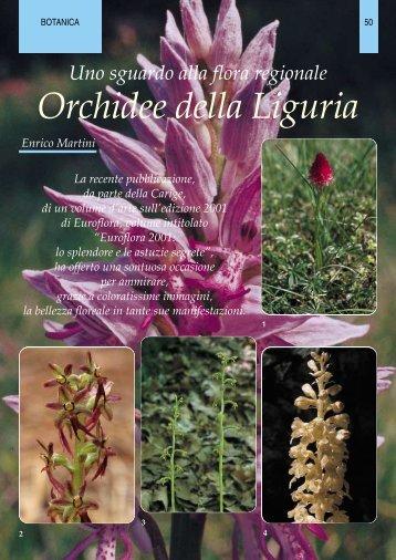 Orchidee della Liguria