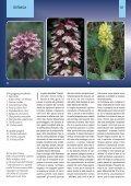 Orchidee della Liguria - Page 3