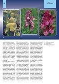 Orchidee della Liguria - Page 4
