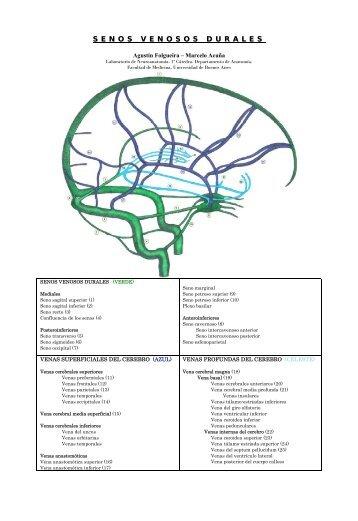 Vena anastomótica inferior - Facultad de Medicina Virtual