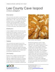 Lee County Cave Isopod - Virginia Department of Conservation and ...
