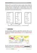 LOS GLÚCIDOS - IES Izpisúa Belmonte - Page 4