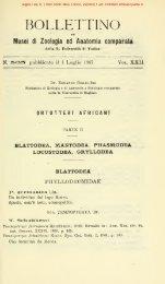 Giglio-Tos, E. (1907) Boll. Mus.Torino, 22