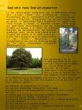 Wormser Friedhofsbläddche - Seite 5