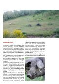 Antico Suino Nero Lucano - Associazione Regionale Allevatori della ... - Page 3