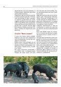 Antico Suino Nero Lucano - Associazione Regionale Allevatori della ... - Page 4