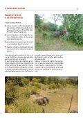 Antico Suino Nero Lucano - Associazione Regionale Allevatori della ... - Page 5