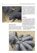 Antico Suino Nero Lucano - Associazione Regionale Allevatori della ... - Page 6
