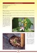 scarica scheda divulgativa fagiolo di Lamon pdf - Veneto Agricoltura - Page 2