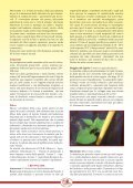 scarica scheda divulgativa fagiolo di Lamon pdf - Veneto Agricoltura - Page 5
