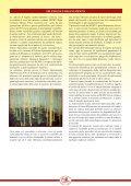 scarica scheda divulgativa fagiolo di Lamon pdf - Veneto Agricoltura - Page 7