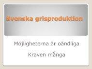 Mattias Espert - Svenska Pig