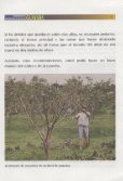 Capacitación técnica para la producción y ... - Agronet - Page 7