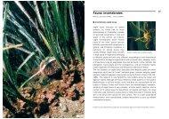 Fauna: invertebrates - Udine Cultura
