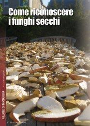 Come riconoscere i funghi secchi - Stagnoletto Group