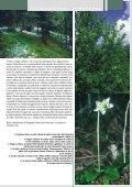 La vegetazione forestale alpina, di Leonardo Rosati - Page 2
