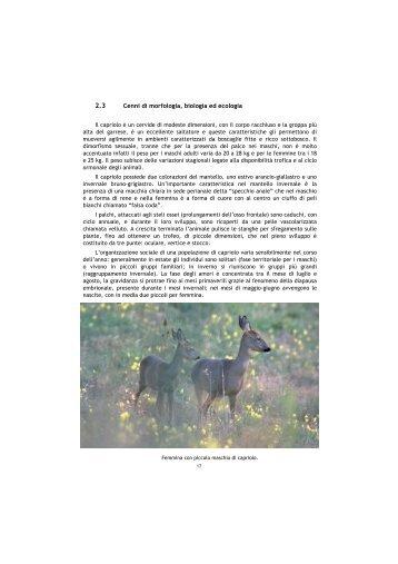 2.3 Cenni di morfologia, biologia ed ecologia - Provincia di Viterbo