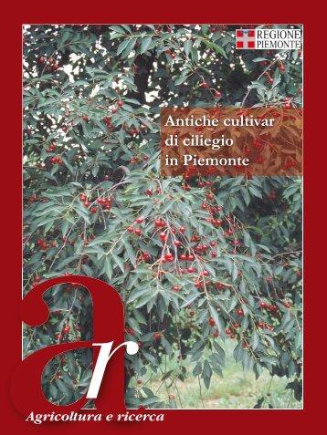 Antiche cultivar di ciliegio in Piemonte - Regione Piemonte