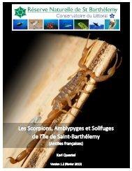 Les Scorpions, Amblypyges et Solifuges de l'île de ... - Archive-Host