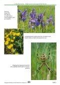 Fotoausstellung der Ortsgruppe Höchberg im Bund Naturschutz in ... - Seite 7