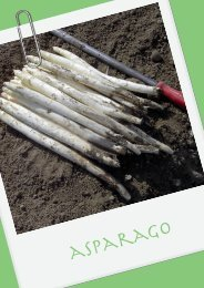 asparago - Veneto Agricoltura