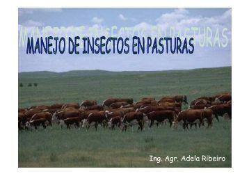insectos en pasturas 2009 - Departamento de Producción Animal y ...