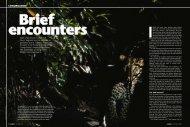 Brief Encounters. - Panthera